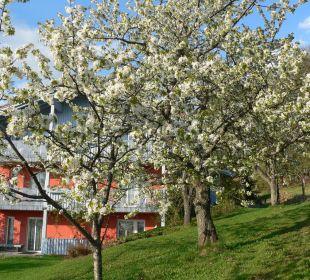 Frühling Landhaus Korte