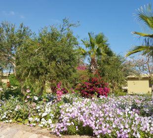 Gartenanlage Three Corners Fayrouz Plaza Beach Resort