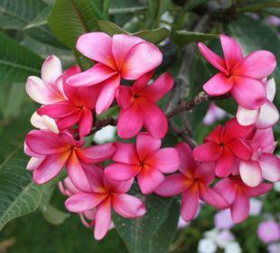 Wunderbare Blumen und Palmen