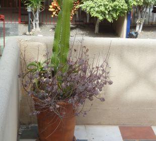 Gartenanlage Aparthotel El Cerrito