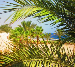 Ausblick Hotel Steigenberger Coraya Beach