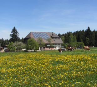 Im Frühling ist es einfach schön... Ferienbauernhof Oberjosenhof