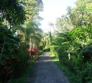 Zufahrt zum Gästehaus Guest House Green Garden House