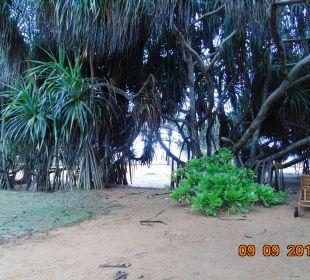 Blick vom Zimmer Hotel Ranweli Holiday Village