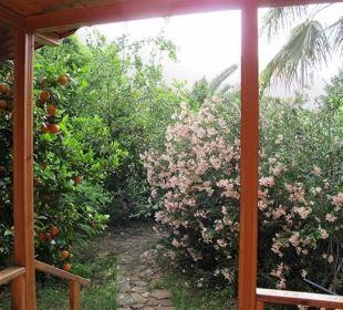 Terrasse von Holtz Bungalows Hotel Anatolia Resort