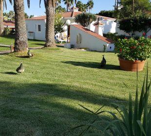 Garten Hotel Miraflor Suites