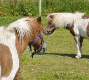 Ponys Ferienhof Meislahn
