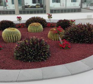 Schöne Bepflanzung  Hotel Las Costas