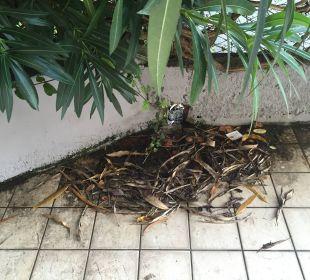 Keine Reinigung auf der Terrasse Hotel Cristina