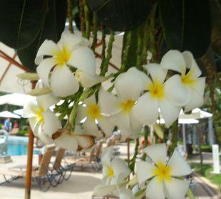 Sonstiges Thai Garden Resort