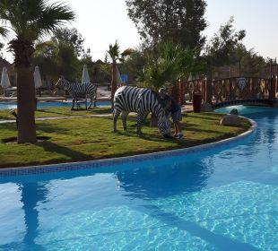 Basen Jungle Aqua Park