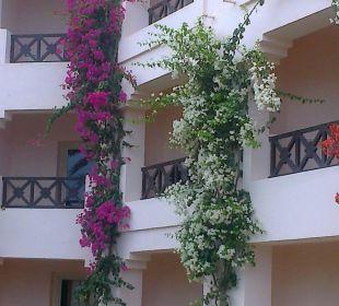 Schöne pflanzenverzierung am gebäude Hotel Safira Palms