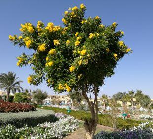 Im Januar Three Corners Fayrouz Plaza Beach Resort