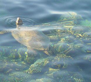Wasserschildkröte direkt am Steg