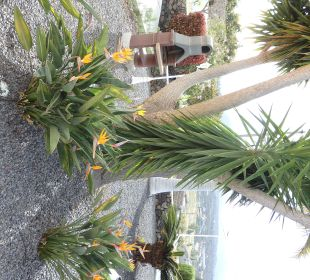 Palmengarten Villen Los Lomos