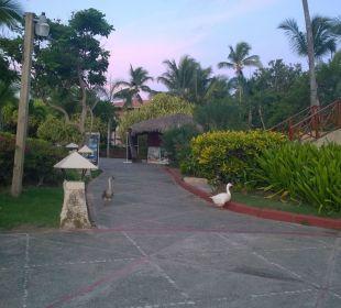 Hotelgäste mit Dauerbleiberecht. Hotel Natura Park Resort & Spa