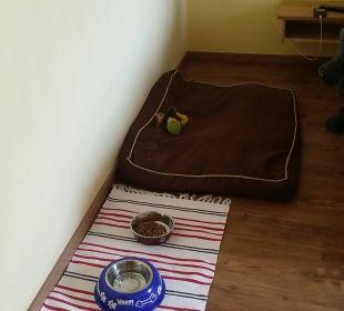 Kissen und Näpfe für den Hund Hotel Grimming
