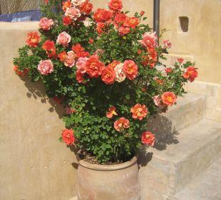 Eine Rose ist eine Rose Boutique Hotel Dar Attajalli