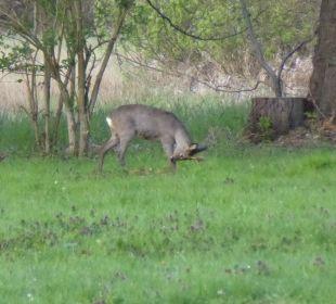 Sonstiges NaturApartments & LandHaus Stauensfließ
