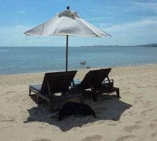 Stillleben Samui Buri Beach Resort & Spa