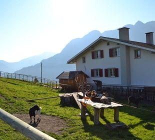 Der hauseigene Streichelzoo Gasthaus Alpina