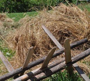 Huiba im Wildschütz Landhaus Wildschütz