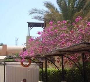 Schöne Bepflanzung 2 Hotel Steigenberger Coraya Beach