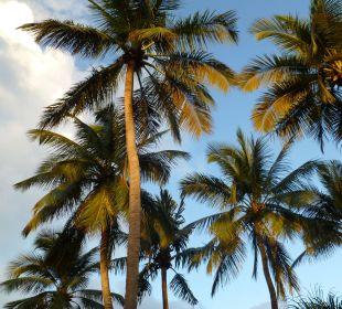 Palmen vor dem Hotel Hotel Tropical Clubs Cabarete
