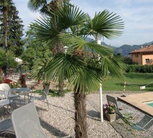 Palme beim Pool Hotel Villa Moretti