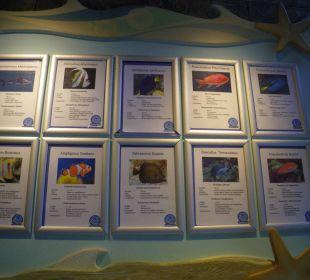 Korallenbad Center Parcs Het Heijderbos