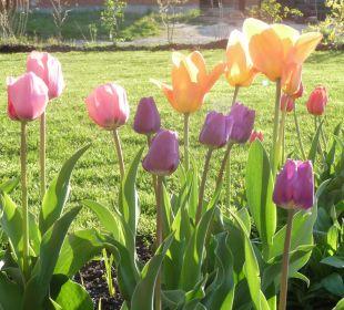 Frühlingsboten Ferienwohnung Haus Rosenrot