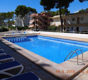 Der Pool Hotel Palma Playa - Cactus