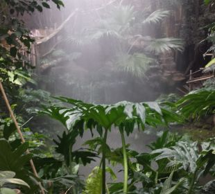 Dschungel  Center Parcs Het Heijderbos