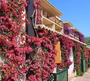 La ns. camera tra le Bouganville  Hotel L'Olivara Villaggio