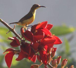 Rumah Isah - Tropische Pflanzen und Vögel Nusa Indah Bungalows & Villa