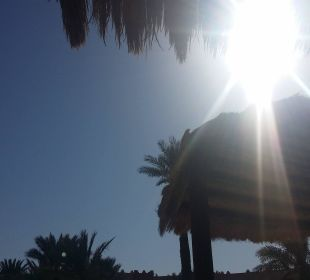 Piscine Hotel Safira Palms