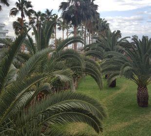 Aus dem Zimmer Hotel Riu Palace Tenerife