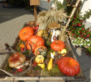 Herbstdeko Edelweiss Grossarl - Der Stern in den Alpen