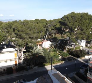 Umbebung Hotel Palma Playa - Cactus