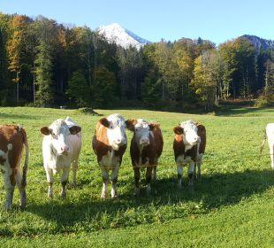 Sonstiges Alm- & Wellnesshotel Alpenhof