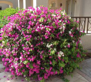 Gartenanlage Hotel Iberotel Makadi Beach