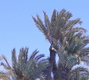 Sonstiges Hotel Fiesta Beach Djerba