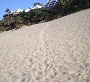 Trampelpfad über Sanddüne Hotel Rocamar Beach