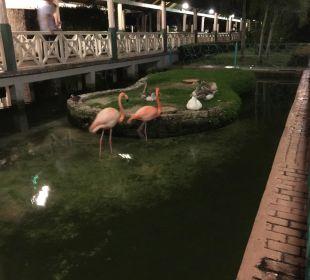 Flamingos IBEROSTAR Hotel Punta Cana