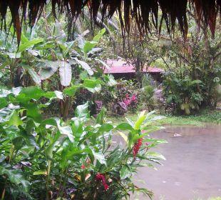 Blick zu den Einzelhäusern Esquinas Rainforest Lodge