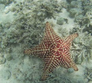 Unterwasserwelt Dreams La Romana Resort & Spa