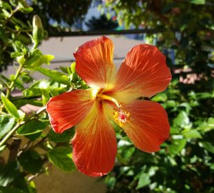 Überall blühende Pflanzen Hotel Titan Select