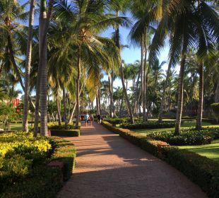 Schöne Parkanlage IBEROSTAR Hotel Punta Cana