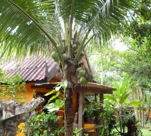 Unser Haus mit Palme Hotel Na Thai Resort