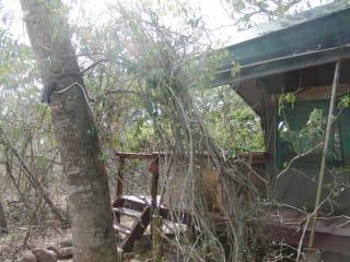 Game Lodge Tembe National Elephant Park